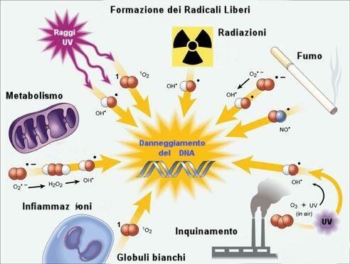 radicali liberi: sostanze che non ossidate sono tra le cause principali dell'MCS